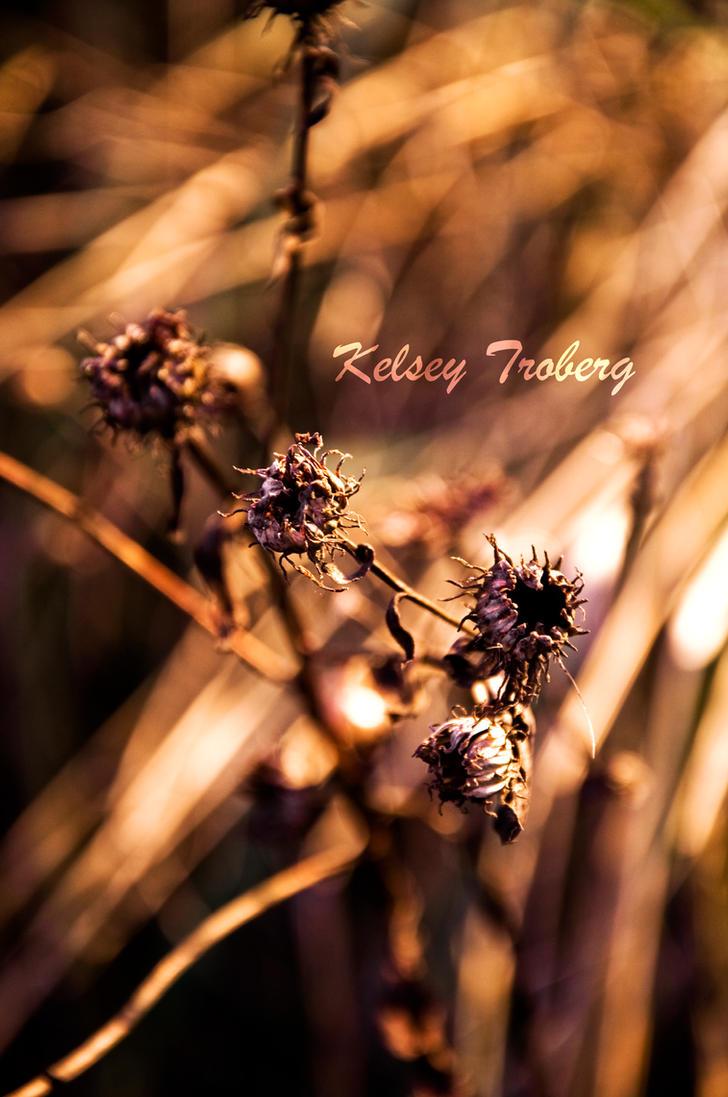 Hinting at Color by KelseyTroberg