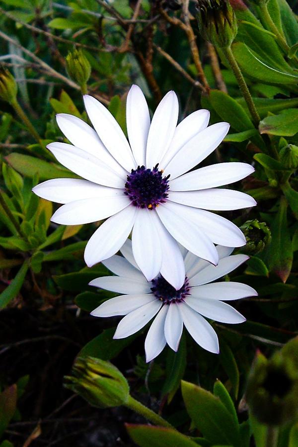 PH flower 04 by Novelekehe