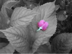 Heart flower by KittyKattyMousey
