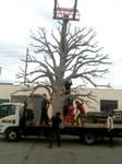 Tree Sculpt for Grammys