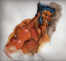 wolvie color study by saltares