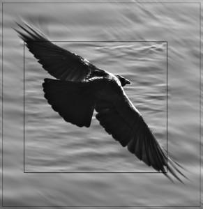 Raven-Al's Profile Picture