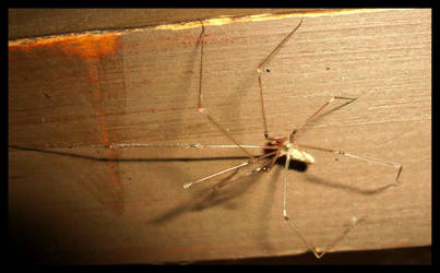 Spider Joints by mygreymatter