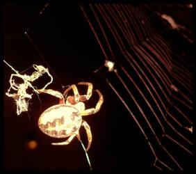 Downtown Spider by mygreymatter
