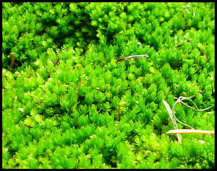 Tiny Green by mygreymatter