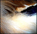 Feathered 5