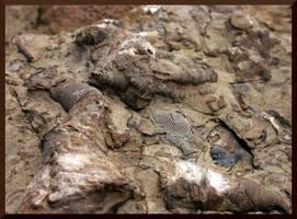 Devonian Fossils 3 by mygreymatter
