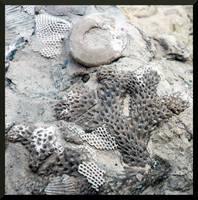 Devonian Fossils 4 by mygreymatter