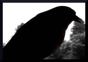 Bird In Black by mygreymatter
