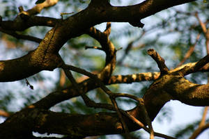 Branch Study by mygreymatter