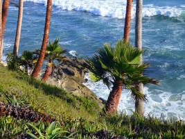 Seaside Palms by mygreymatter