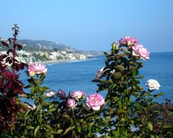 Ocean Roses by mygreymatter