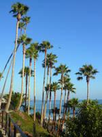 Palmy Heights by mygreymatter