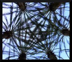 Palm Canopy by mygreymatter