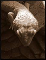 Lizard Lurk by mygreymatter