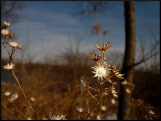 Dry Beauty by mygreymatter