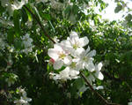 Porch Blossoms by mygreymatter