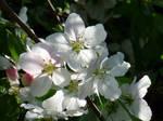 Porch Blossoms 2 by mygreymatter
