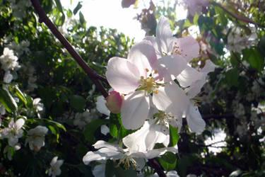 Porch Blossoms 3 by mygreymatter