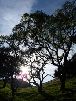 Tree Satisfaction