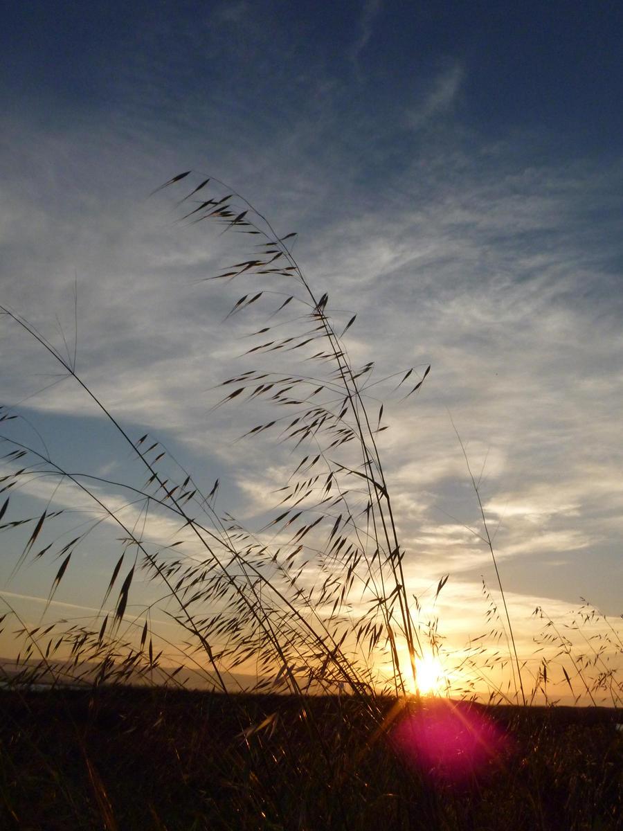Sunset Flare by mygreymatter
