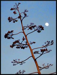 Alviso Moonrise