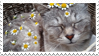 - Stamp: Cat and daisies. - by ChicaTH