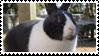 - Stamp: Dutch rabbit. - by ChicaTH