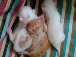 Babies by senkalemre