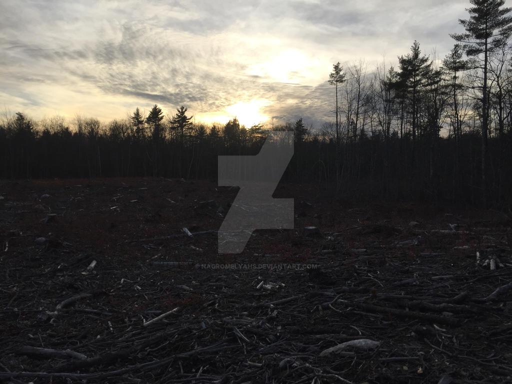 Hunting Sunset by nagromelyahs