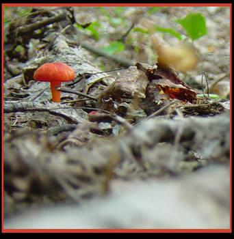 Orangeshroom by twila
