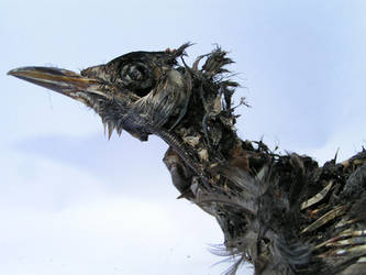 dead bird 3 by madamBesson