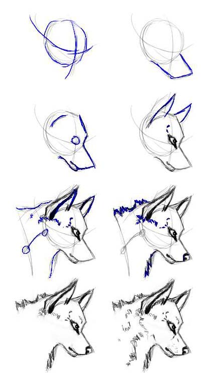 Easy Wolf Head Drawings