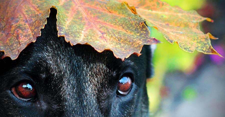 Autumn Eyes by petrichore