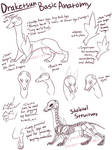 [1] Draketsun Species Guide - Anatomy