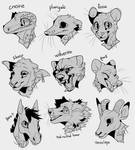 Animal Headshot Practice by Sweet-n-treat