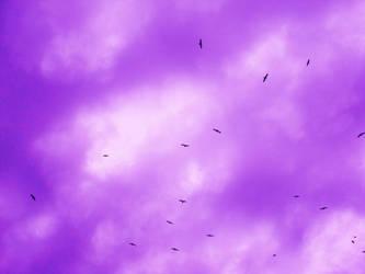 Sky is Over us