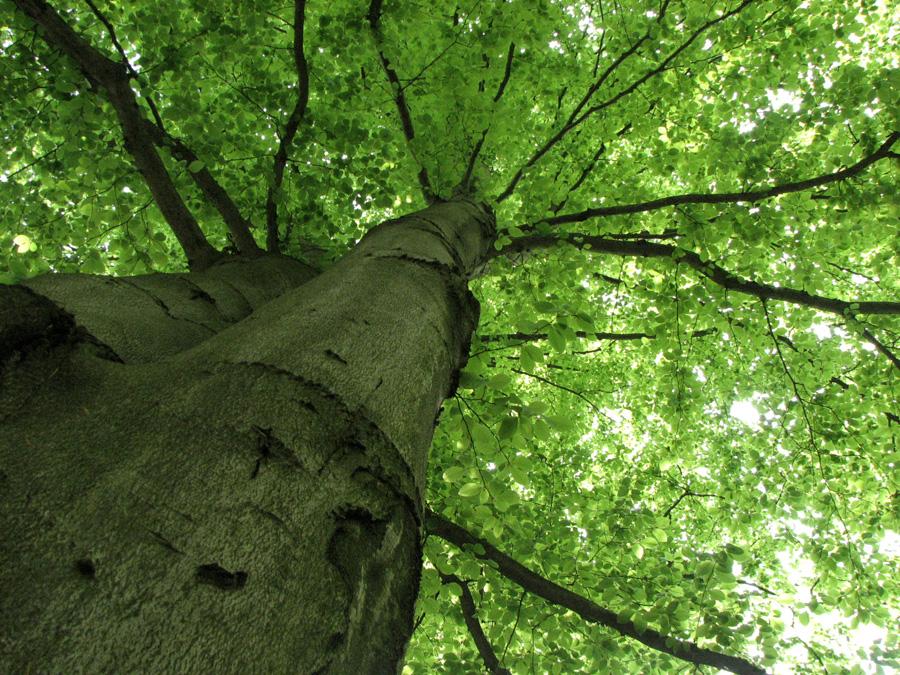 Dream tree by LunaPopelka