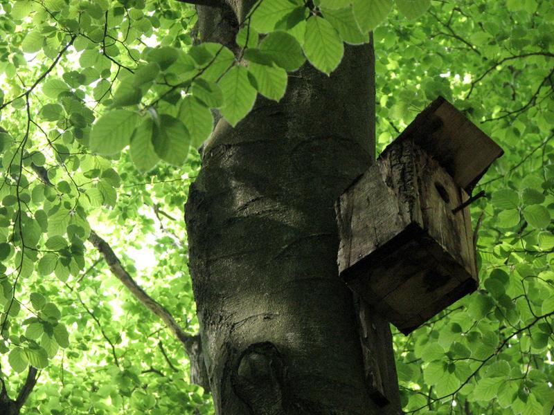 Bird Nesting Box by LunaPopelka