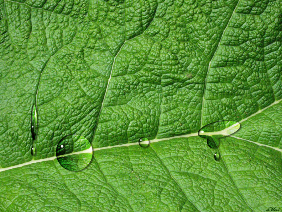 green-leaf-veins by mai994