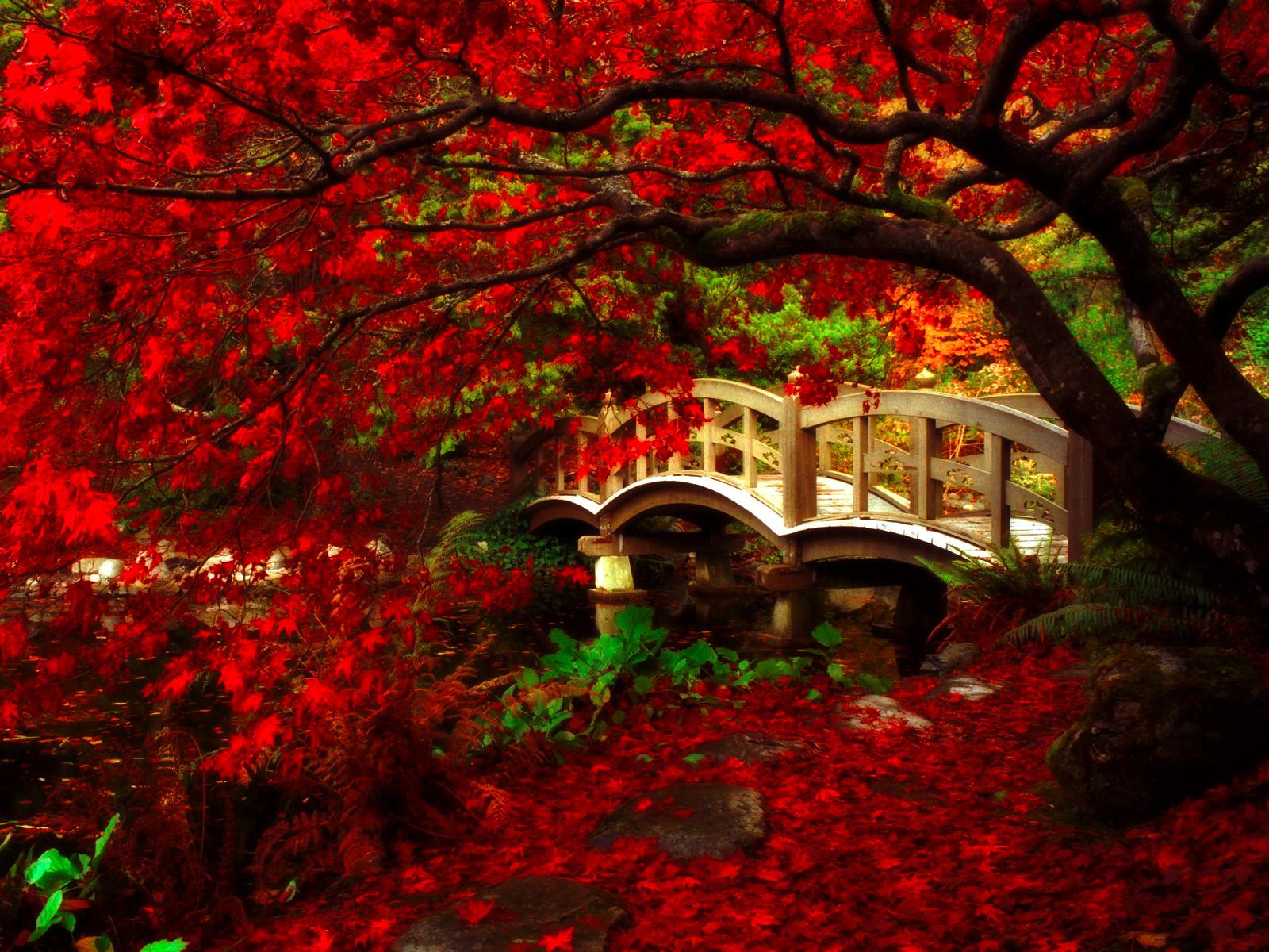 Japanese garden royal roads university british c by for Flowers for japanese garden