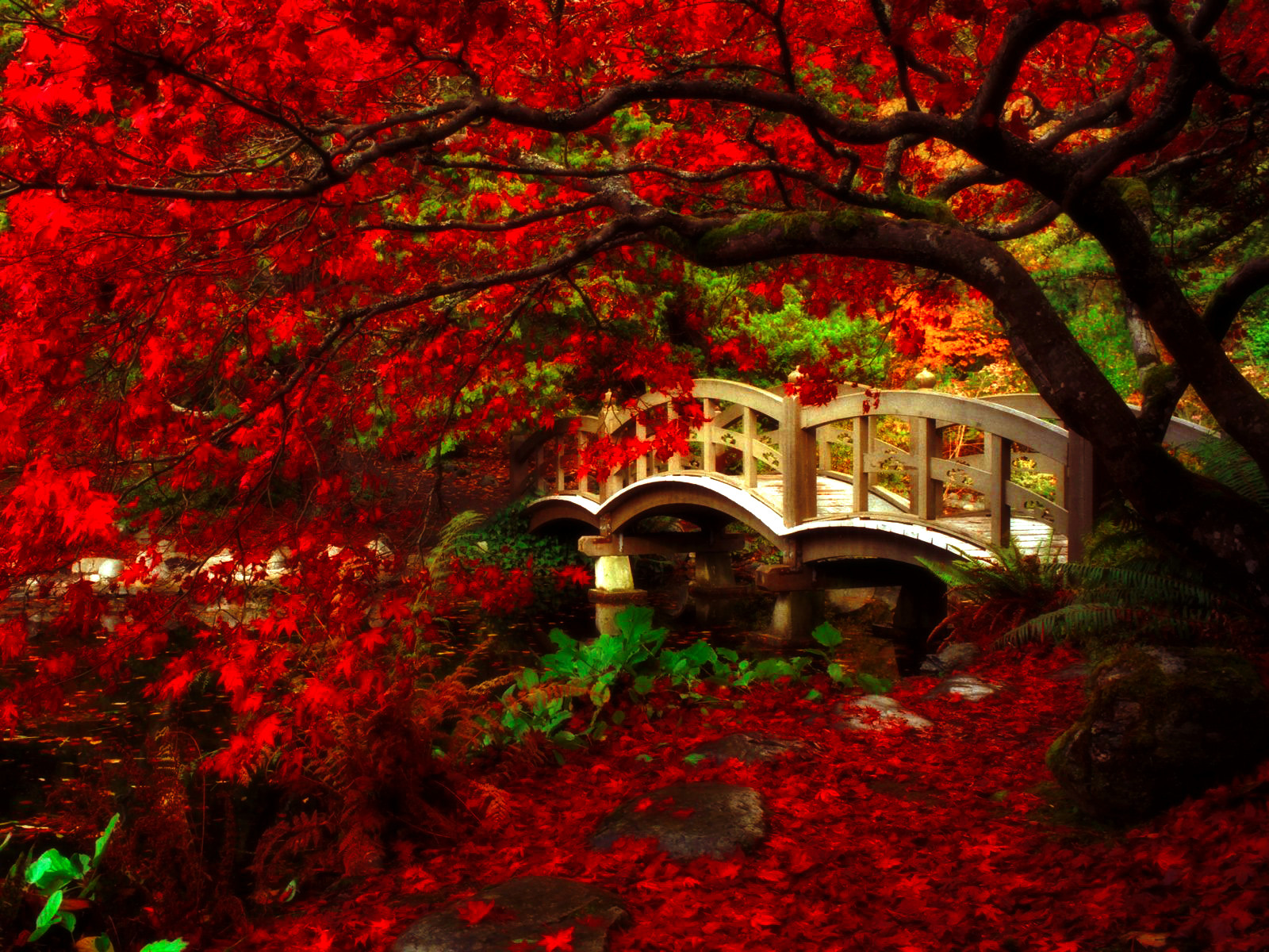 Japan Garden Flowers: Japanese Garden, Royal Roads University, British C By