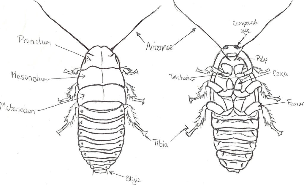 Anatomy of a roach