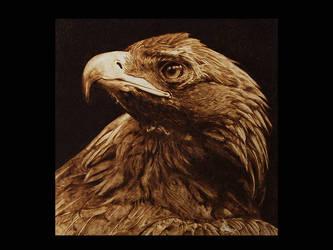 The Tawny Eagle by ddntati