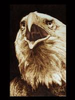 falconiformes by ddntati