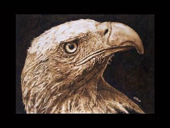 The Tawny Eagle II by ddntati