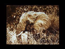 African elephant by ddntati