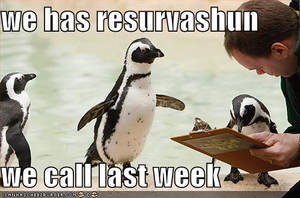 Funny peguins by funnyxXXpicsXxx