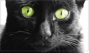 Black Cat by cesarmello