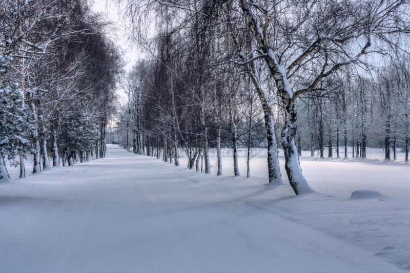 Winter Wonderland by PetalDreams